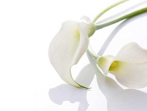 Kleine Beerdigungsblume